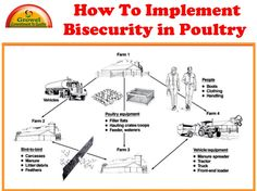 Bio-Security plan is a set of practices designed to prevent the entry and spread of infectious diseases into and from a poultry farm. Biosecurity requires the … Poultry Equipment, Poultry Farming, Poultry House, 4 H, Coops, How To Plan, Homestead, Garden Ideas, House Design