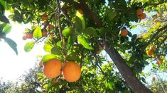 Orange, Fruit, Places, Photos, Majorca, Lugares