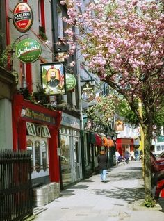 Cork, Ireland city street with pretty pink blossoms on the trees.