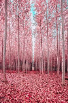 Pink Forest🌳💖Oregon💖🌳 ○ Photo by 🌻 🌻 ○○ . Wonderful Places, Beautiful Places, Beautiful Pictures, Beautiful Forest, Pink Forest, Good Vibe, Destination Voyage, Parcs, Elle Decor