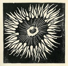 A hand-carved rubber stamp. Tangled Flower, Block Prints, Art Prints, Printmaking Ideas, Sketches Of Love, Stamp Carving, Tide Pools, Graphic Patterns, Print Artist