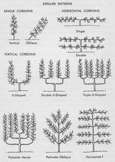 Tankar från Trädgårdsmästarn: Spaljerade träd och landsväg - retrotrend.
