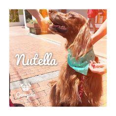 Nutella, aprovechó el domingo, salió de paseo, le compraron collar y pañoleta y hoy regresa a casa con esta sonrisa❤️ #doglovers #petlovers #sunday #sun #sol #dog #Bogotá #Colombia #compraColombiano