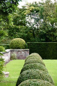 This is the Manor's topiary. You should see our neighbors topiary........................