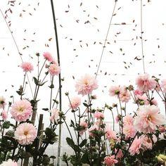 "Say ""I Love You"" With a Flower CSA   thegardenspotter.com"
