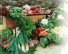 Wish my garden produced this much!