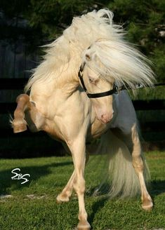 Now that is a sassy spirited horse!