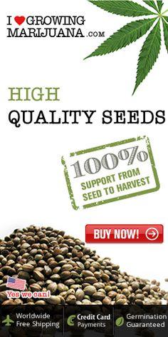 buy our marijuana seeds More