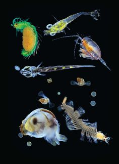 Researchers studied plankton from around the globe and uncovered vast genetic diversity and clues to how warming temperatures may affect ocean life.
