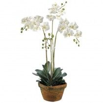 Gaskell Orchids available at http://www.seniorfurnishings.com/