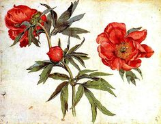 Botanical - Flower - Peonies. I think the flower on the far right - color an all would be a beautiful tattoo