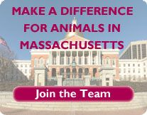 Humane Lesson Plans from the MSPCA -These prepared lesson plans address a variety of humane themes for elementary, middle school, and high school students.  Lessons are aligned to the Massachusetts Department of Education's curriculum frameworks, and are designed to be taught by classroom teachers.  Most lessons include an instructor introduction and related handouts.
