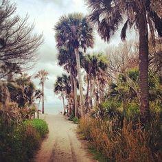 Botany Bay Plantation Heritage Preserve on Edisto Island - 45 minutes south of Charleston, SC