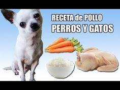 Como hacer COMIDA CASERA PARA PERROS Y GATOS ★ RECETA ★ PetDarling - YouTube
