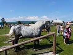 plecat de acasă: Târgul de cai de la Horodnicul de Sus