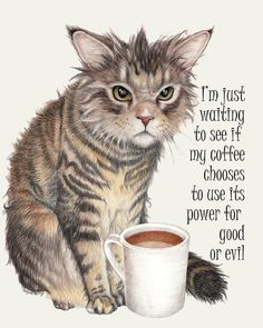 I Love Cats, Cute Cats, Funny Cats, Funny Animals, Cute Animals, I Love Coffee, My Coffee, Coffee Cat, Crazy Cat Lady