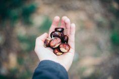 automne-lisebery http://lisebery.com