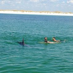 where to swim with the dolphins in Panama City Beach, FL Florida Vacation Packages, Florida Travel, Vacation Spots, Panama City Beach Florida, Panama City Panama, Florida Beaches, Destin Florida, Seagrove Beach Florida, Florida Dolphins
