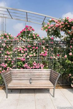 Japaninfo added 31 new photos to the album: กุหลาบเช้า+brunch@อาคารอนุรักษ์ใกล้ Nakanoshima Rose Garden — at 中之島公園.