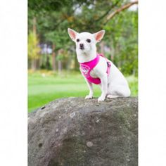 COMFORT FLASH VALJAAT PINKKI | Rukka Pets Keyboard, Arrow, French Bulldog, Neon, Mini, Dogs, Animals, Design, Bulldog Frances