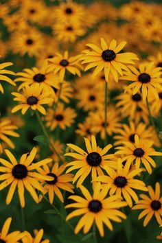 #summer #flowers #yellow #wallpaper #iphone
