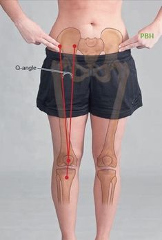 Q-angle Anatomical Landmark Body Therapy, Massage Therapy, Physical Therapy, Leg Anatomy, Muscle Anatomy, Human Anatomy Drawing, Human Body Anatomy, Muscular System, Massage Tips