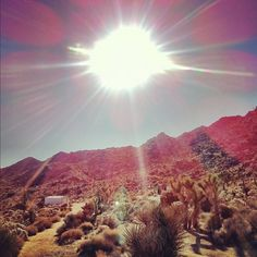 sunrise at joshua tree #wanderlust