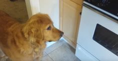 How to trick a fussy dog that won't eat. You HAVE to see this!