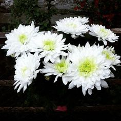 #white #flowers #floral #flori #spring #beauty