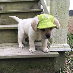 This pup in a hat is too adorable!