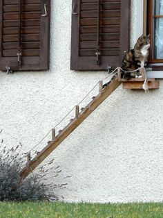 Cat outside ladder to window!