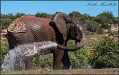 The local fire brigade at the Addo Elephant National Park – image taken from the main camp. #elephant The Locals, Maine, National Parks, Elephant, Camping, Photography, Animals, Campsite, Photograph