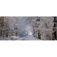 Tree Lined Road In Winter East Hill Quebec Canada Canvas Art - David Chapman Design Pics (33 x 14)