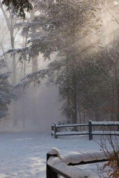 Winter Szenen, Winter Love, Winter Magic, Winter Light, Winter Walk, Winter White, Foto Picture, Snow Light, Forest Light