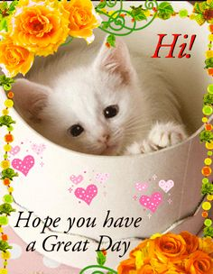 Hi Hope you have a great day hello angel friend kitty comment good morning good day greeting graphic beautiful day Cute Good Morning Images, Funny Good Morning Quotes, Good Morning Inspirational Quotes, Good Morning Gif, Good Morning Picture, Good Morning Friends, Good Morning Greetings, Good Morning Wishes, Morning Cat