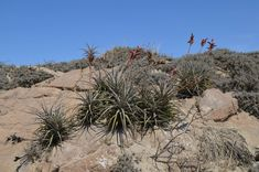 Literature about succulent plants. Travel Agency, Planting Succulents, South America, Peru, Flora, Plants, Arequipa, San Juan, Turkey