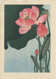 """Flowering Lotus"" by Koson"