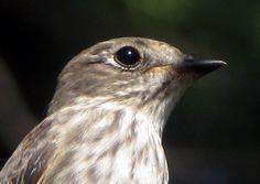 Tiny Bird, Hummingbirds, Asian, Brown, Animals, Animales, Animaux, Brown Colors, Animal