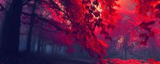 red passion - Google Search