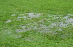 Getting wet plants  One way to help with lawn drainage is simply to use plants that thrive in water and that drink up a lot of it. If your...