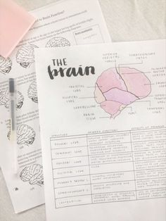 Study Break, Study Hard, Studyblr, Psychology Notes, Psychology Major, Biology College, Medicine Notes, School Organisation, Handwriting Analysis