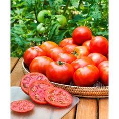 Heinz Super Roma Tomato