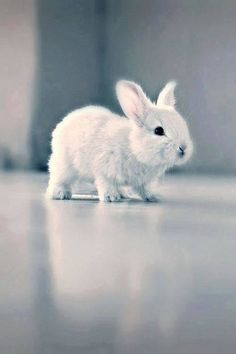 Adorable Pet Rabbit... Don't you just NEED one?