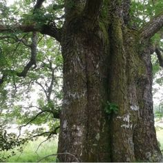 A podcast dedicated to sharing the folklore, magic and wonder of trees, herbs an aspects of witchery. Produced by Mark Buxton; OBOD Druid, Wiccan (G&A) and witchy person.  Come and listen as we walk together In Spirallingleaf's Grove.