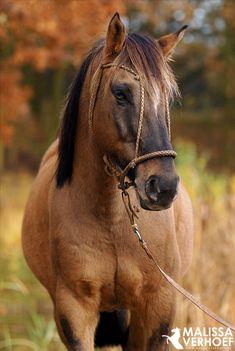 Peron, Argentijns paard