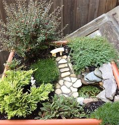 looking at photos as these will help guide you for plant placement, and types of plants to use.