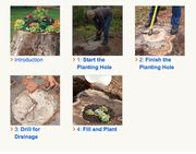 Can't afford stump grinding?  Turn that stump into a planter.  Here's how...