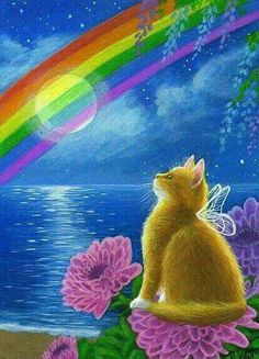 MOON IN THE RAINBOW. cat recipes monty the cat cats things cat base awesome cats cat and dog lost cat cat craft funny kitty cats cat tutorial guilty dogs laughing cat cat stuff furniture cat home ideas sheep cat