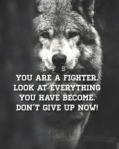 Wolf Pack Quotes, Leo Quotes, Wolf Quotes, Animal Quotes, Wisdom Quotes, Motivational Quotes For Working Out, Positive Quotes, Inspirational Quotes, Winning Quotes