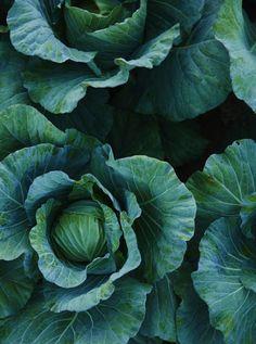 50 ideas fruits and vegetables photography ana rosa - - Fruit And Veg, Fruits And Vegetables, Vegetables Photography, In Natura, Fotografia Macro, Edible Garden, Fruit Garden, Nutrition Tips, Farm Life
